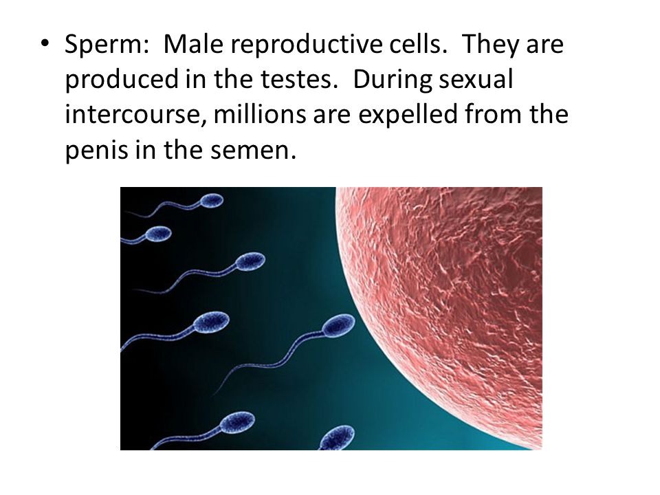 Sperm: Male reproductive cells. They are produced in the testes