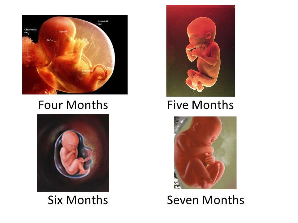 Four Months Five Months