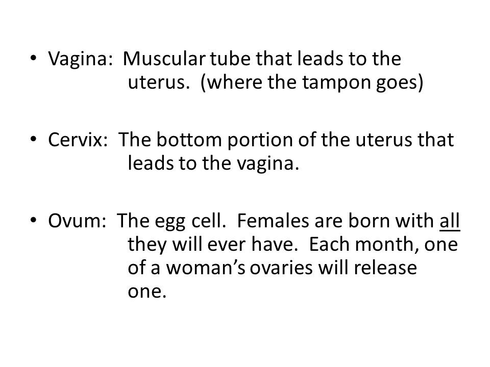 Vagina: Muscular tube that leads to the. uterus
