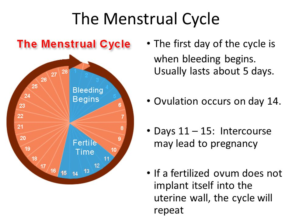 The Menstrual Cycle The first day of the cycle is