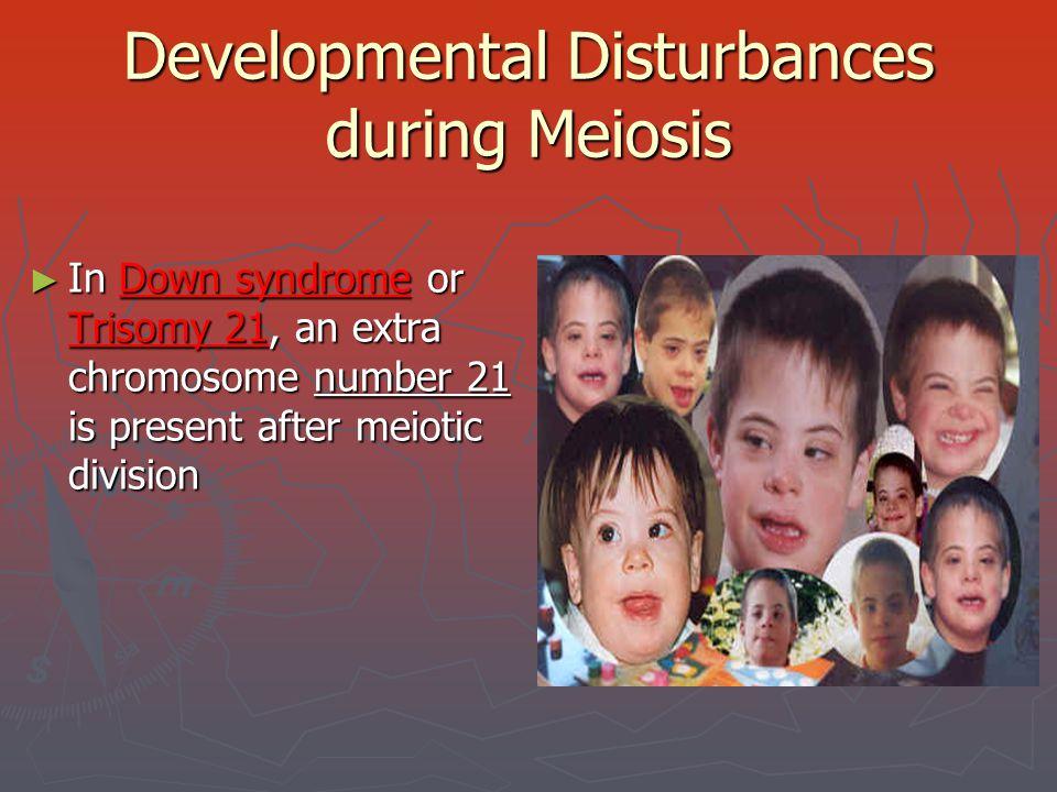 Developmental Disturbances during Meiosis