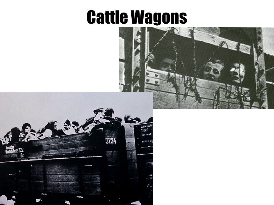 Cattle Wagons