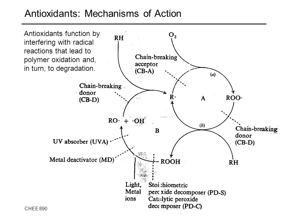 Antioxidants: Mechanisms of Action