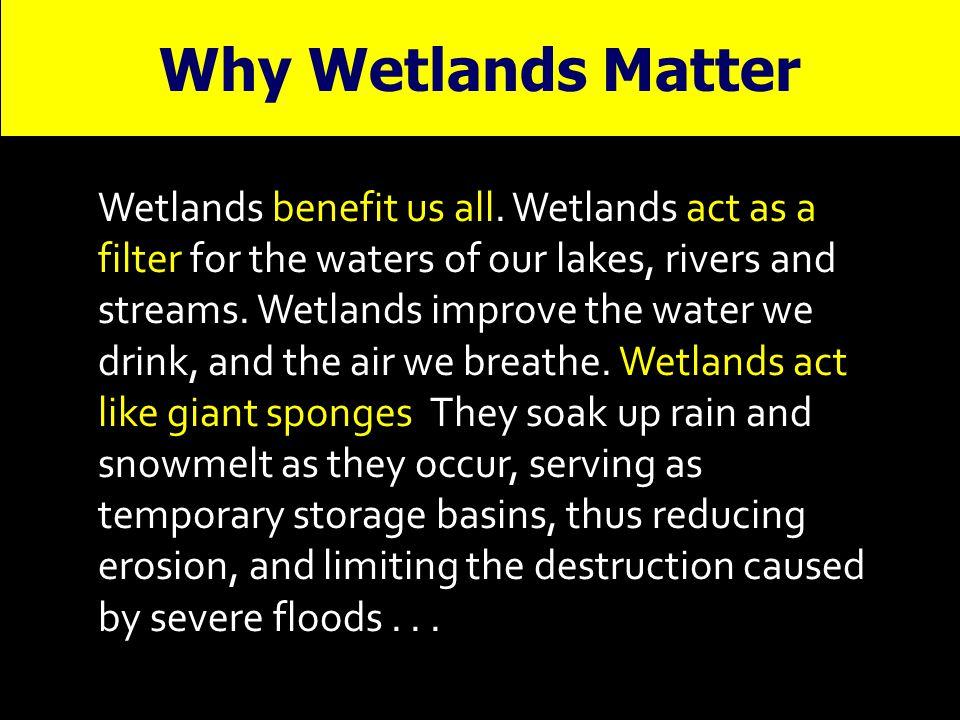 Why Wetlands Matter