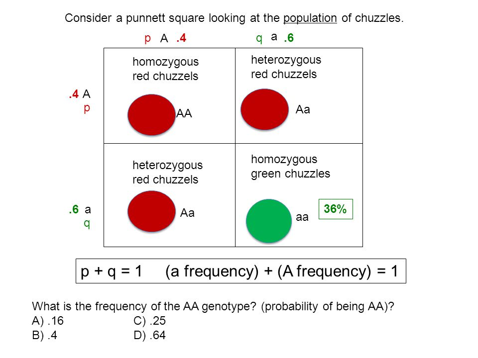 p + q = 1 (a frequency) + (A frequency) = 1