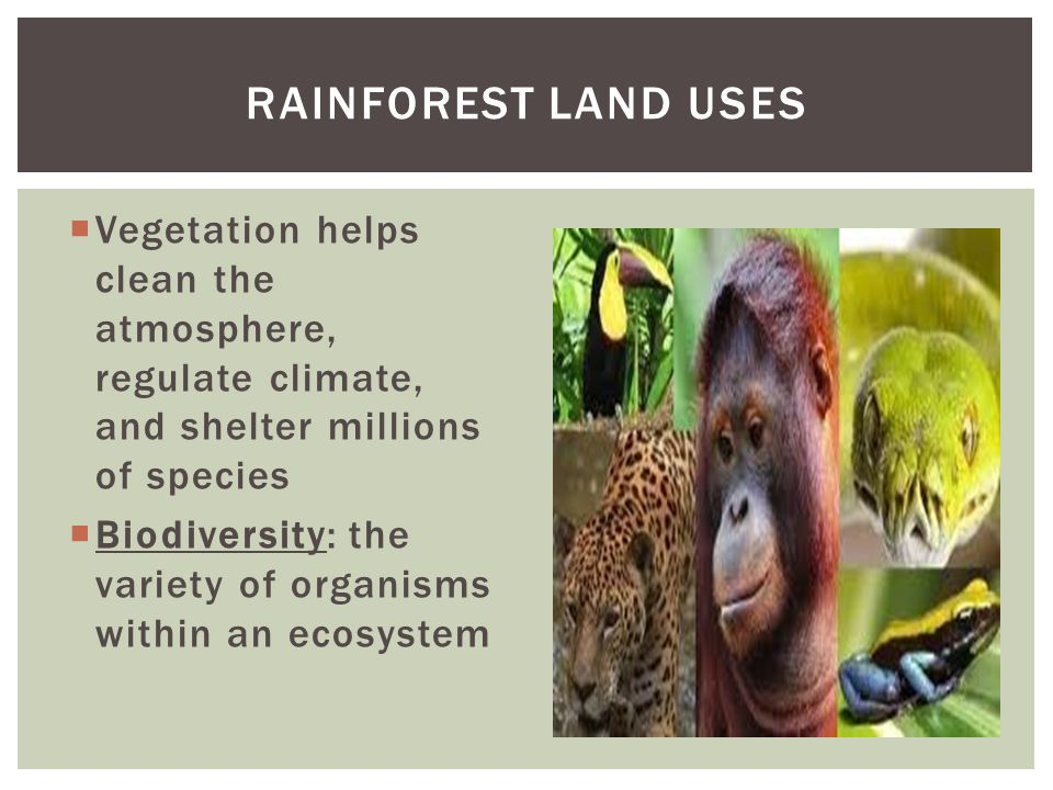 RAINFOREST LAND USES Vegetation helps clean the atmosphere, regulate climate, and shelter millions of species.