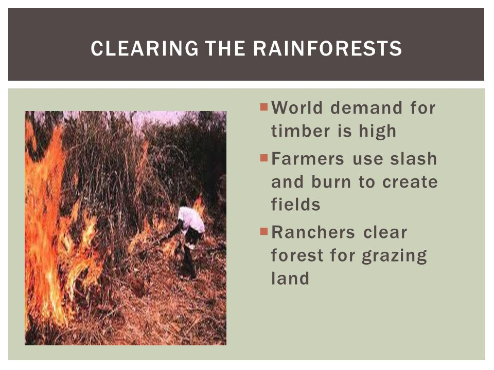 CLEARING THE RAINFORESTS
