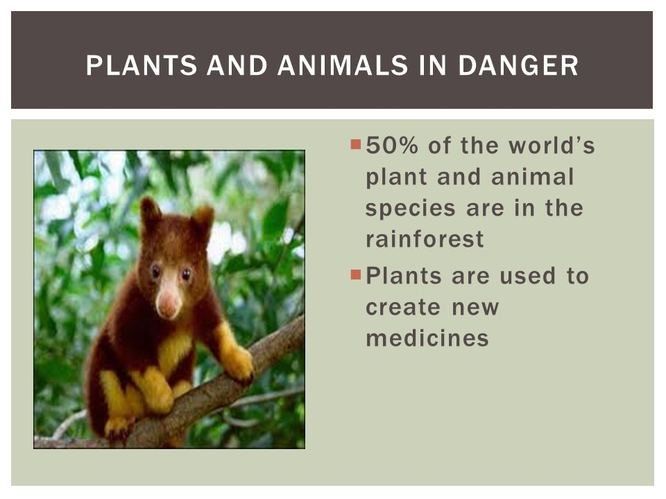 PLANTS AND ANIMALS IN DANGER
