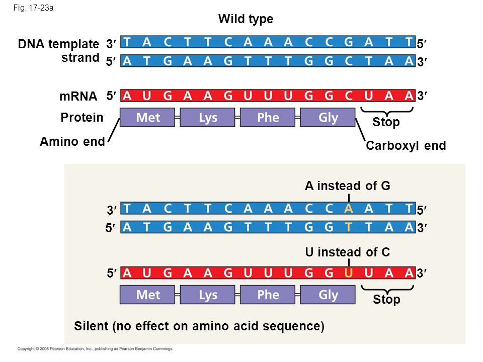 Silent (no effect on amino acid sequence)