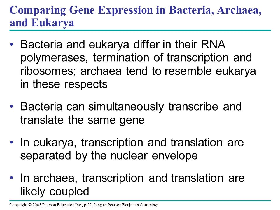 Comparing Gene Expression in Bacteria, Archaea, and Eukarya