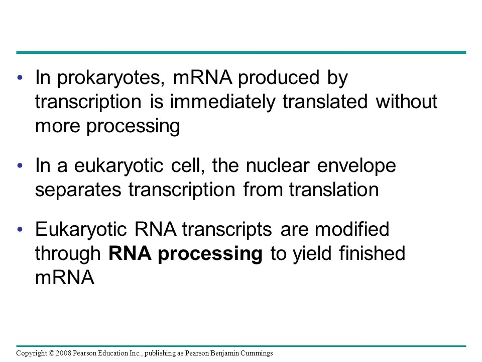 In prokaryotes, mRNA produced by transcription is immediately translated without more processing