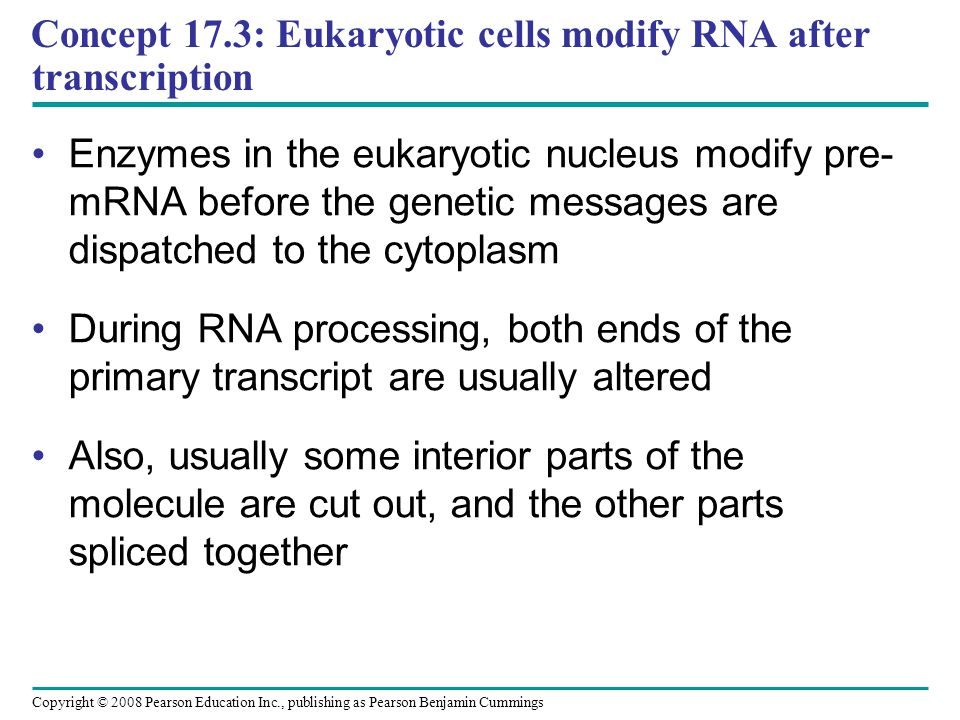 Concept 17.3: Eukaryotic cells modify RNA after transcription