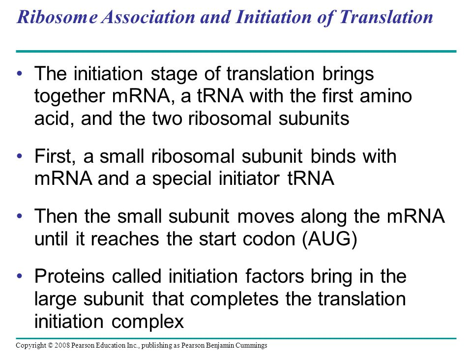 Ribosome Association and Initiation of Translation