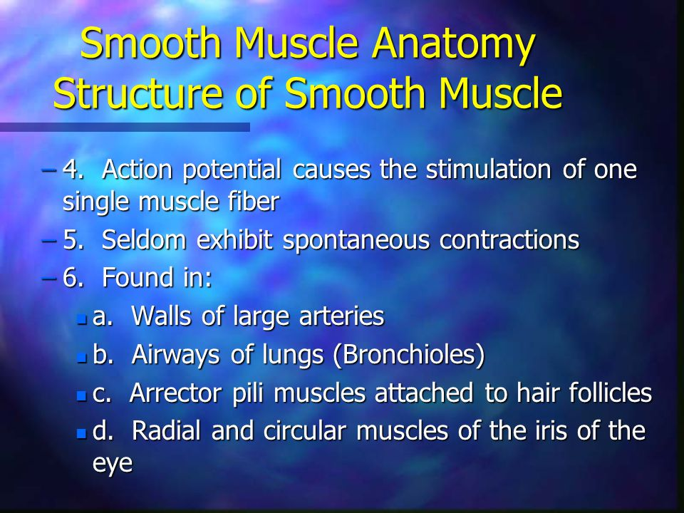 Smooth Muscle Anatomy Structure of Smooth Muscle