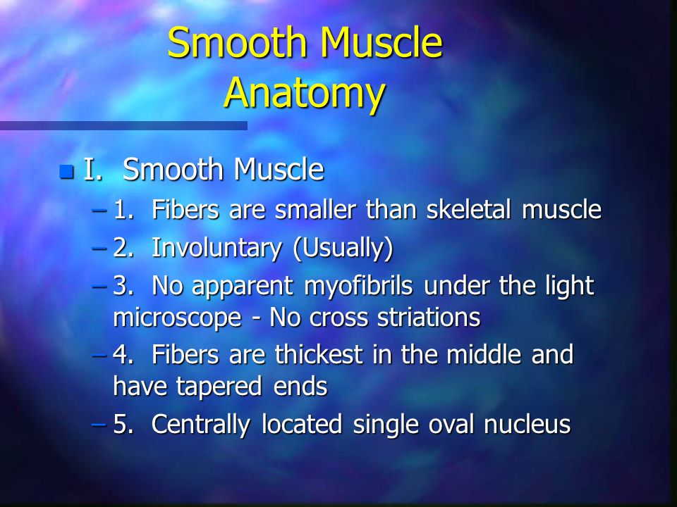 Smooth Muscle Anatomy I. Smooth Muscle