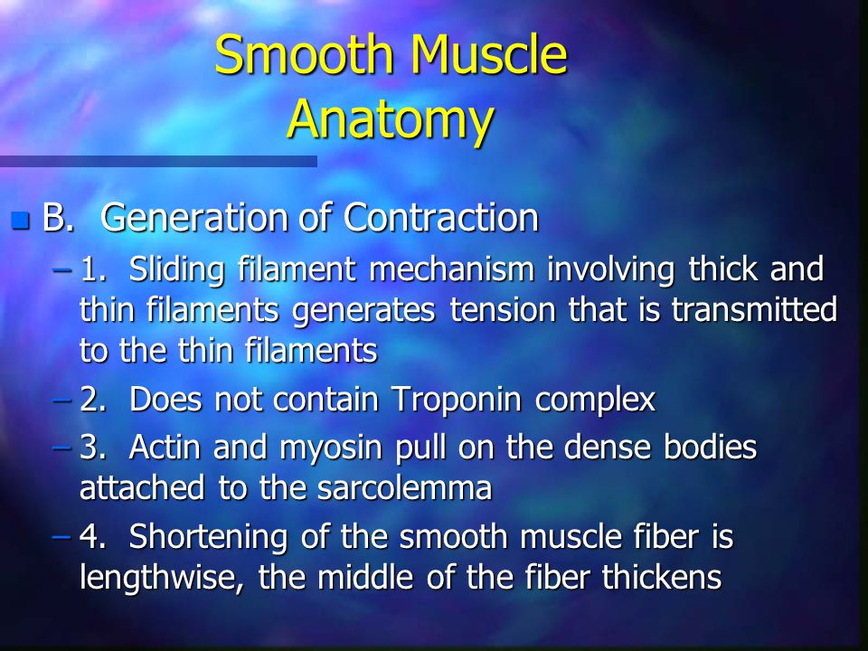 Smooth Muscle Anatomy B. Generation of Contraction