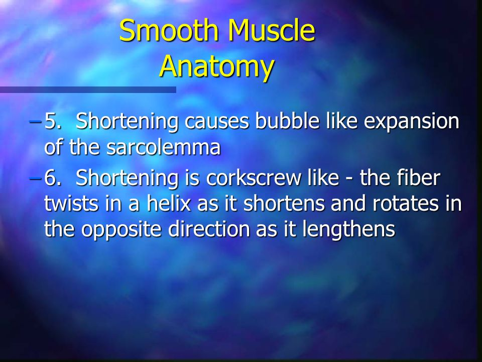 Smooth Muscle Anatomy 5. Shortening causes bubble like expansion of the sarcolemma.