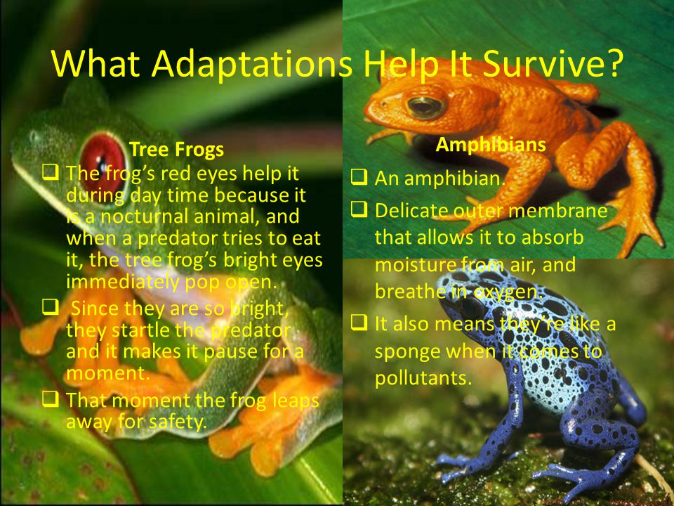 What Adaptations Help It Survive