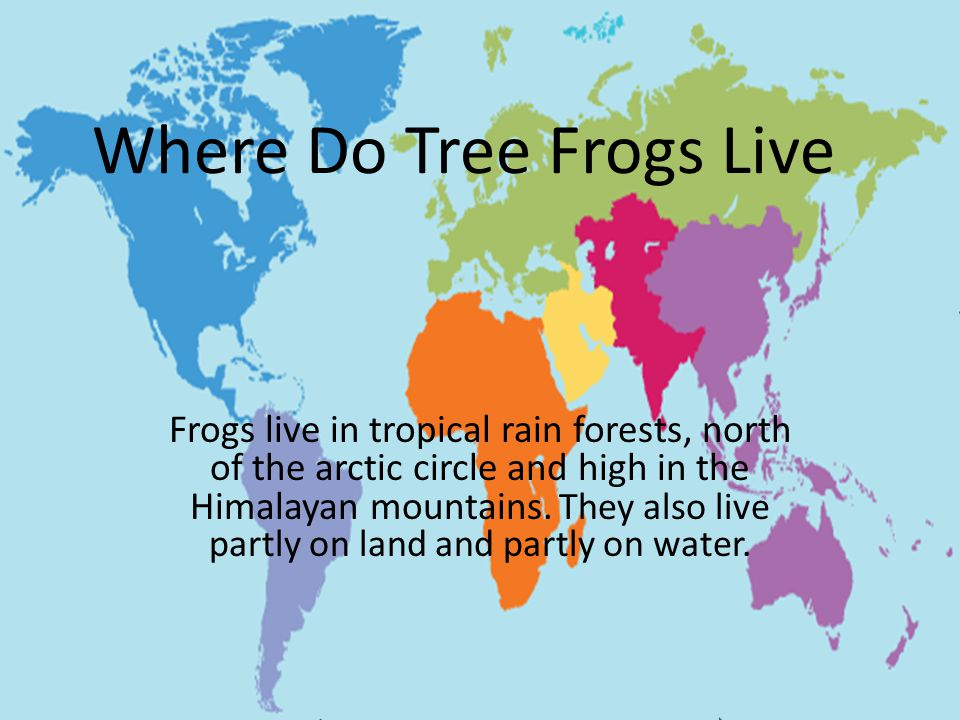 Where Do Tree Frogs Live