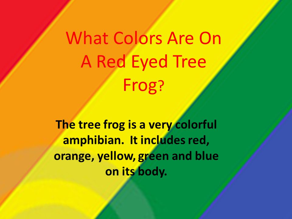 What Colors Are On A Red Eyed Tree Frog