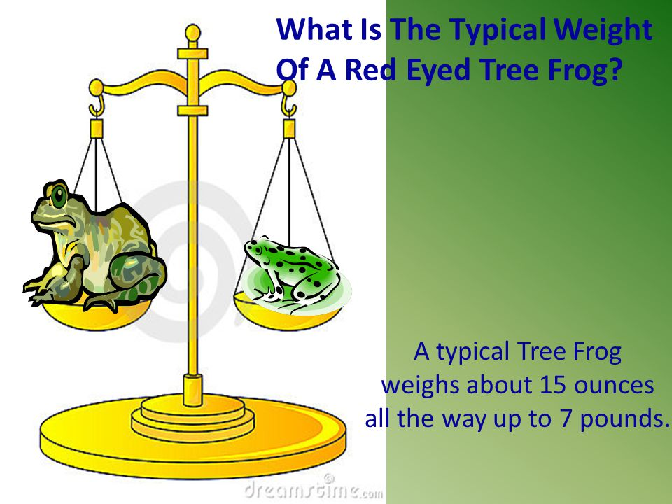 What Is The Typical Weight Of A Red Eyed Tree Frog