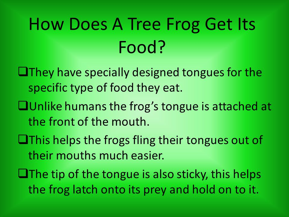 How Does A Tree Frog Get Its Food