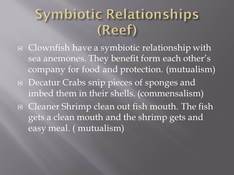 Symbiotic Relationships (Reef)