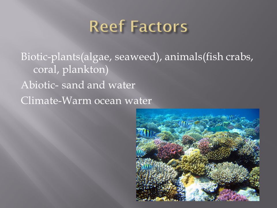 Reef Factors Biotic-plants(algae, seaweed), animals(fish crabs, coral, plankton) Abiotic- sand and water Climate-Warm ocean water