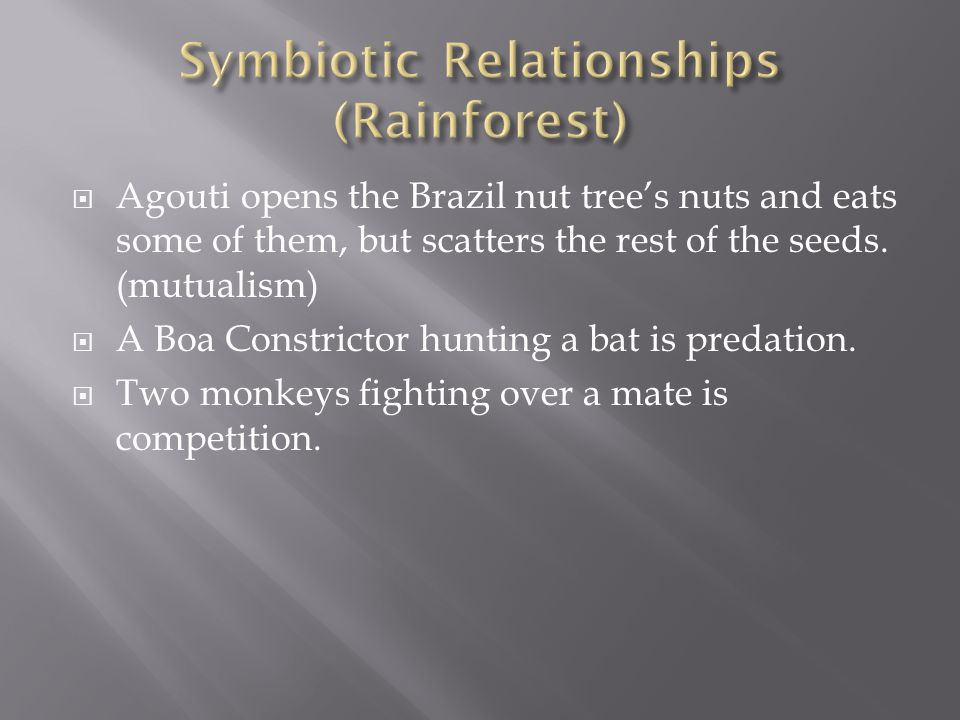 Symbiotic Relationships (Rainforest)