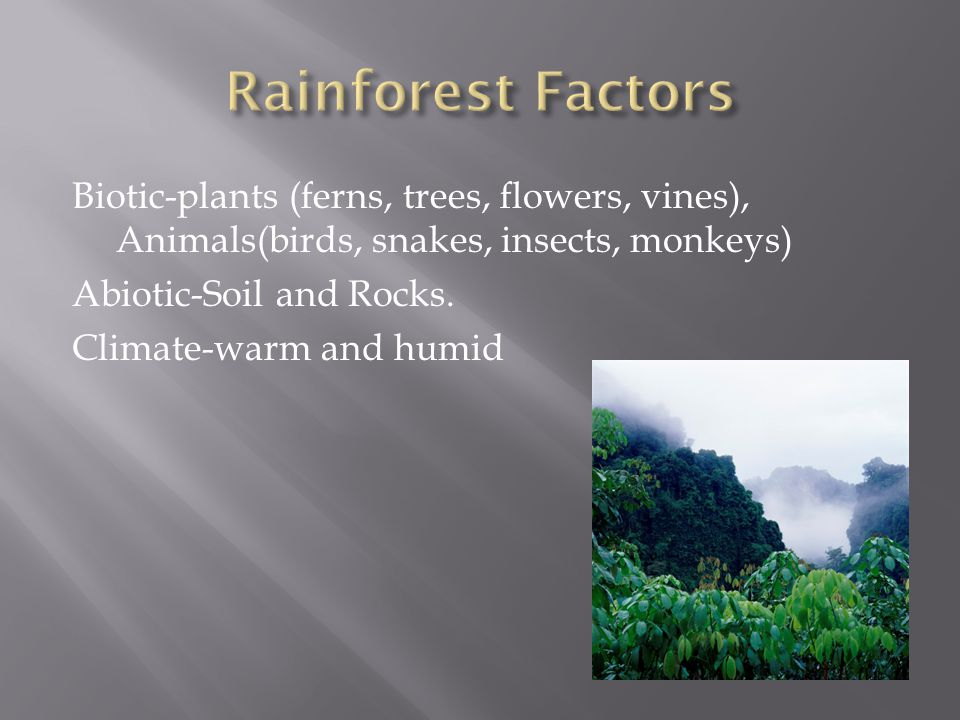 Rainforest Factors