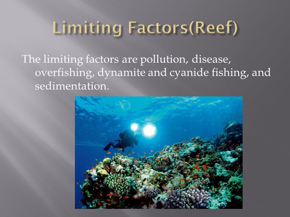 Limiting Factors(Reef)