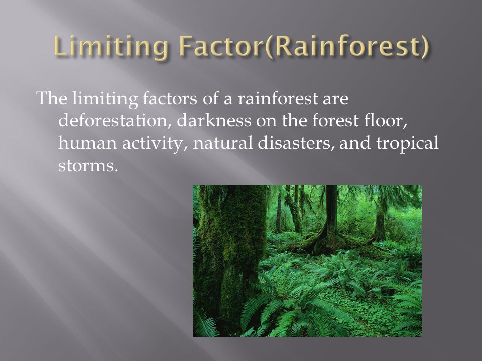 Limiting Factor(Rainforest)