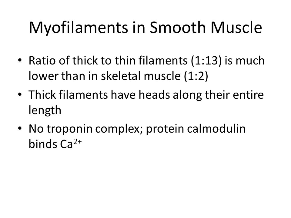 Myofilaments in Smooth Muscle