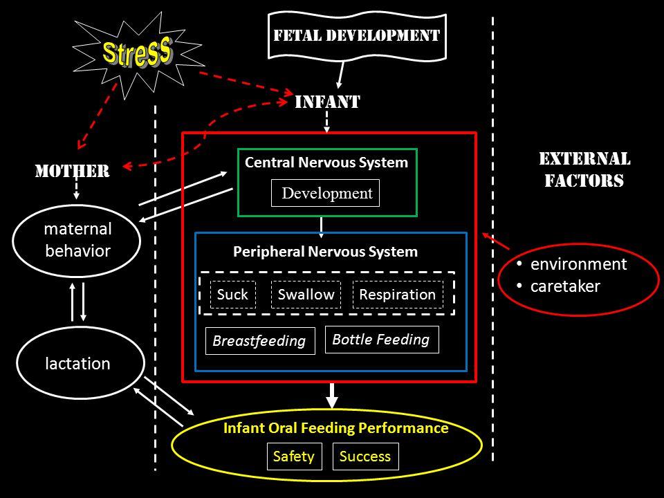 Stress Infant External Mother Factors maternal behavior environment