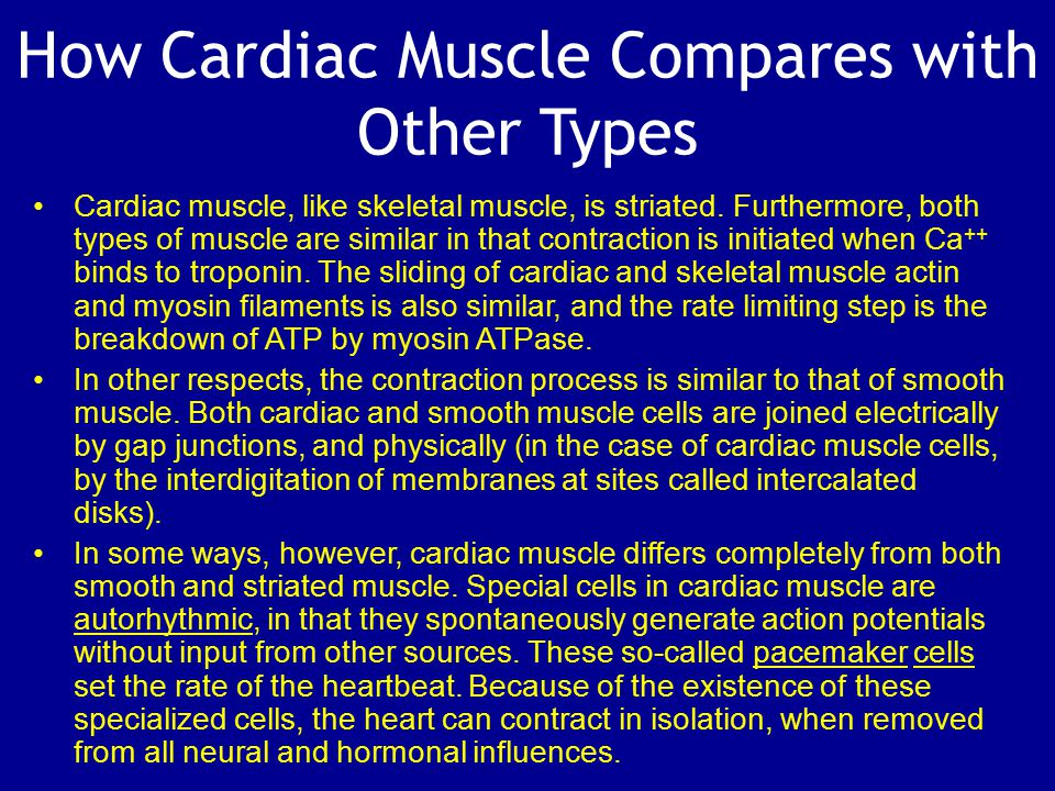 How Cardiac Muscle Compares with Other Types