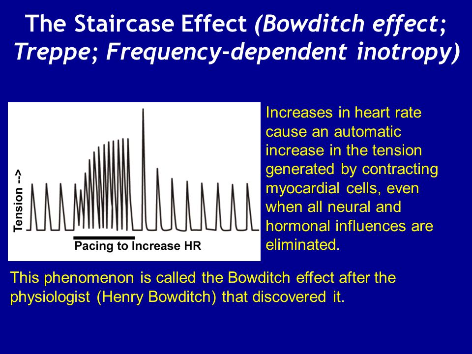 The Staircase Effect (Bowditch effect; Treppe; Frequency-dependent inotropy)