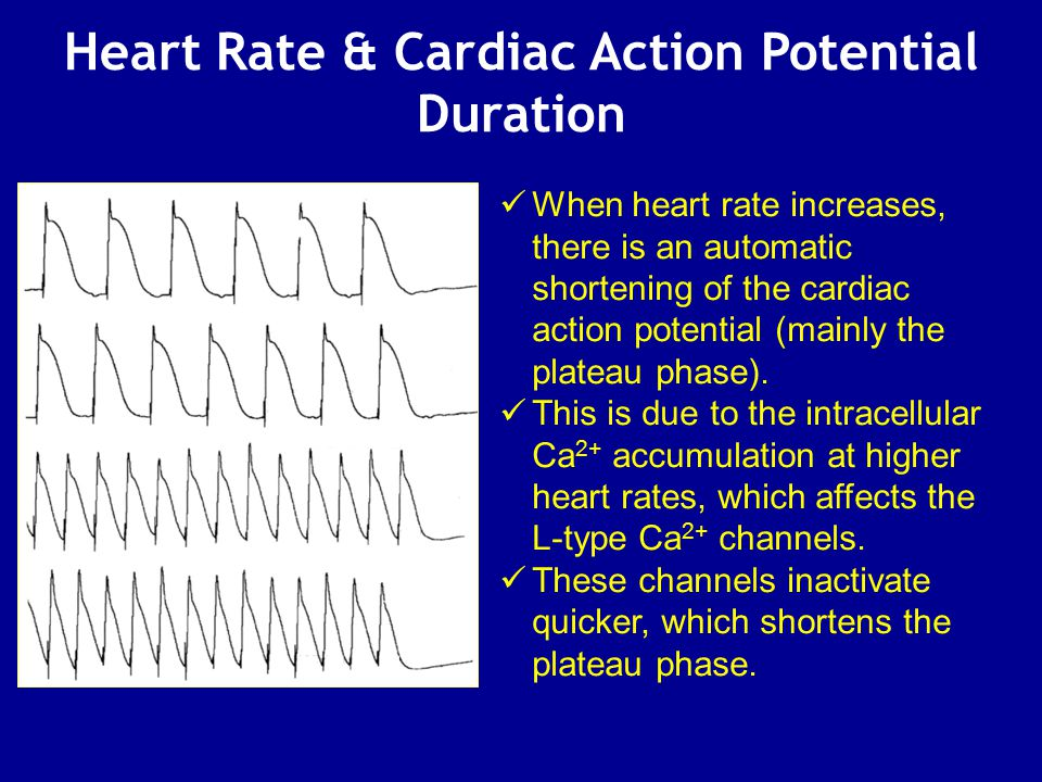Heart Rate & Cardiac Action Potential Duration