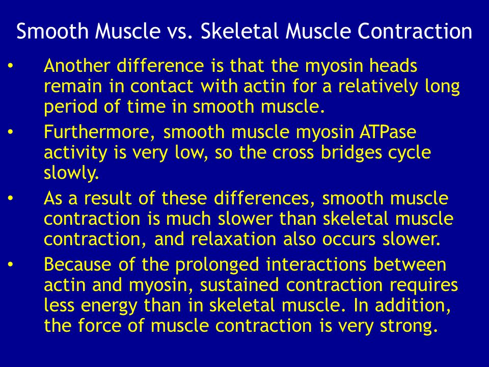 Smooth Muscle vs. Skeletal Muscle Contraction