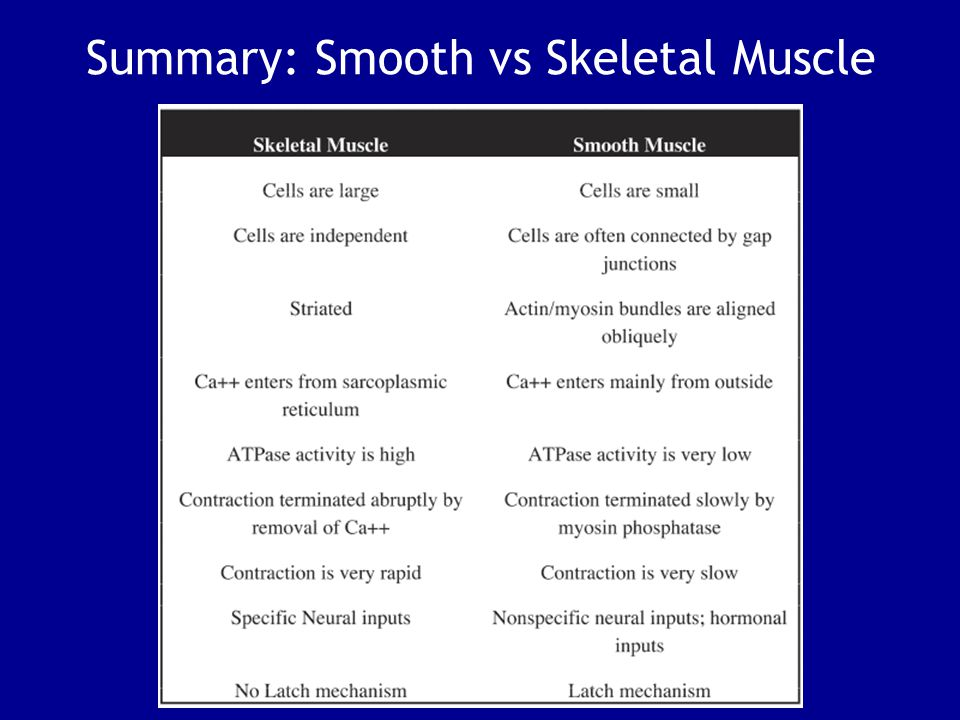 Summary: Smooth vs Skeletal Muscle