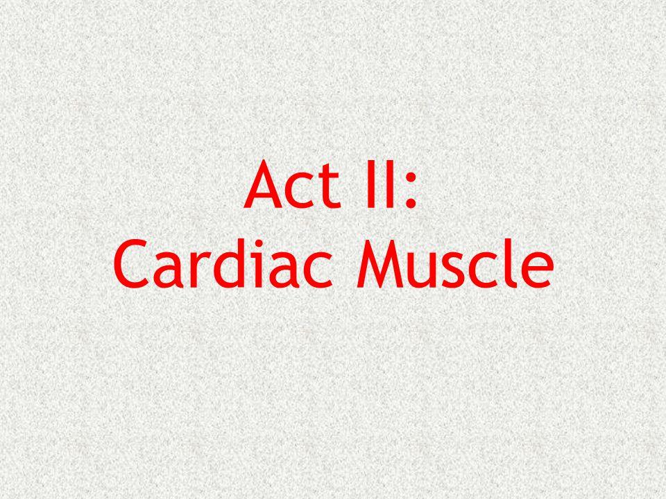 Act II: Cardiac Muscle