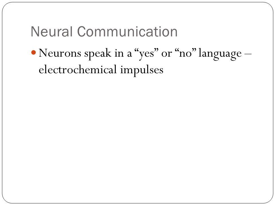 Neural Communication Neurons speak in a yes or no language – electrochemical impulses