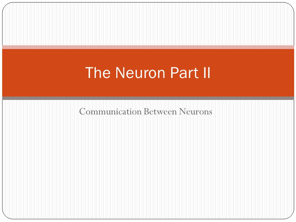 Communication Between Neurons