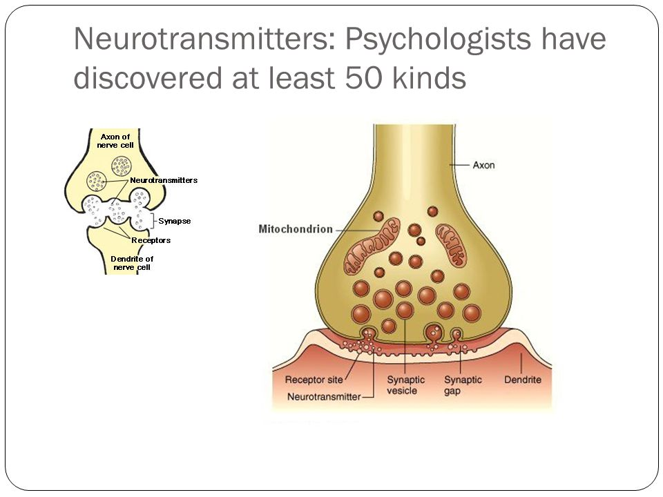 Neurotransmitters: Psychologists have discovered at least 50 kinds