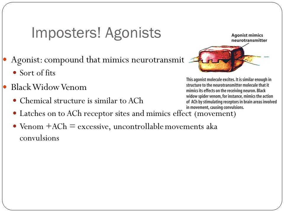 Imposters! Agonists Agonist: compound that mimics neurotransmitters