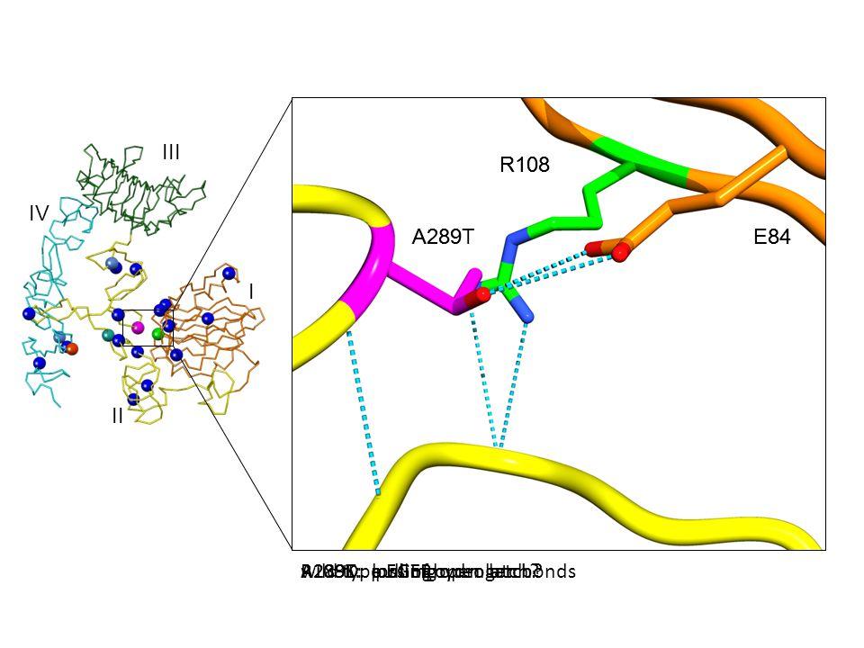 R108K: loss of hydrogen bonds A289T: pulling open latch