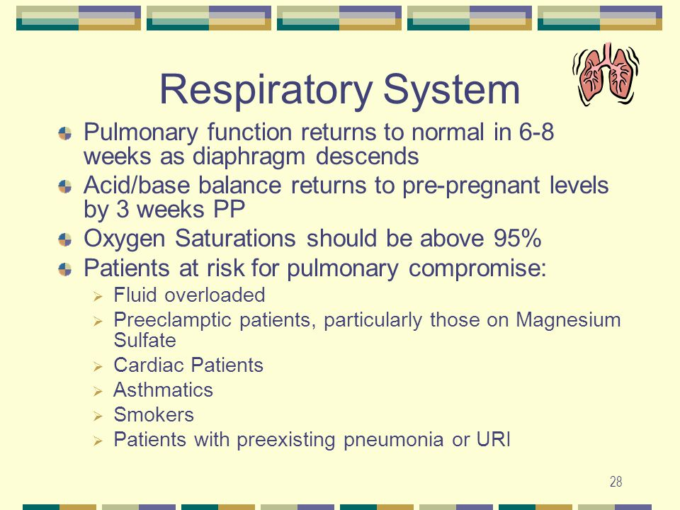 Respiratory System Pulmonary function returns to normal in 6-8 weeks as diaphragm descends.
