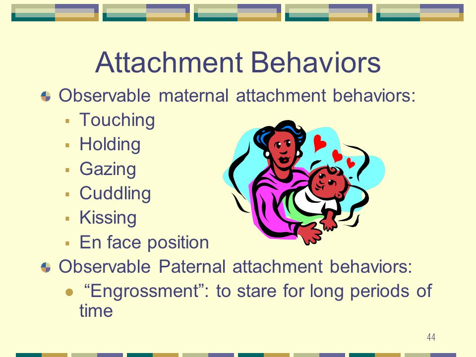Attachment Behaviors Observable maternal attachment behaviors: