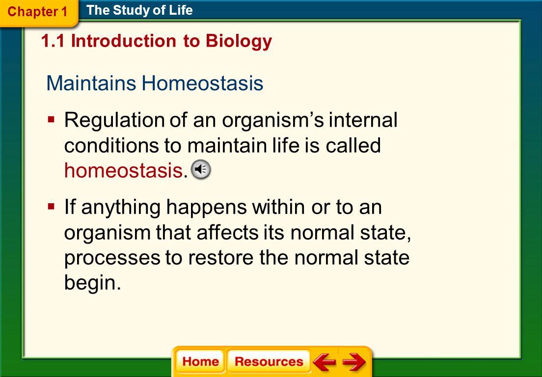 Maintains Homeostasis