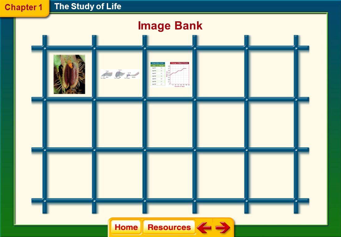 Chapter 1 The Study of Life Image Bank