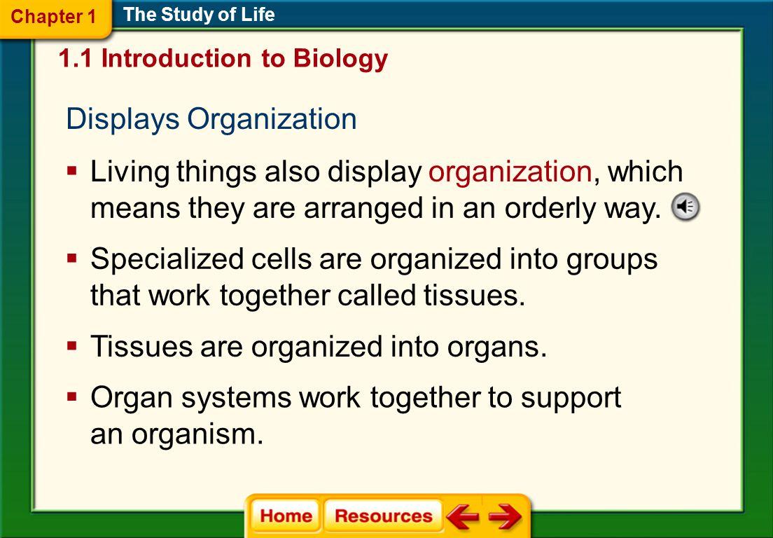 Displays Organization